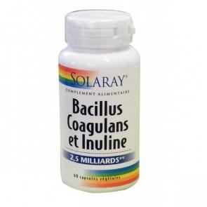 Bacillus coagulans et Inuline Solaray